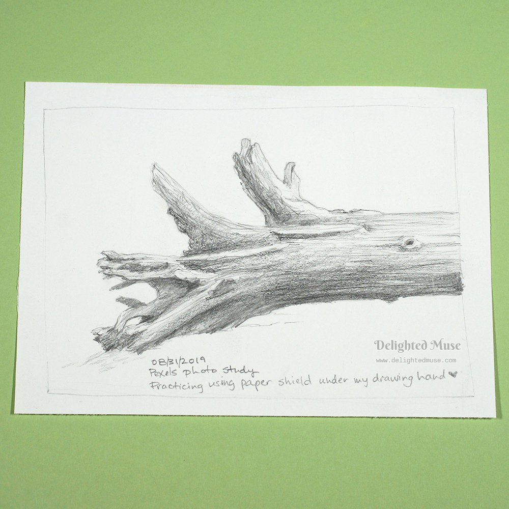 Drawing of a fallen tree trunk in graphite pencil