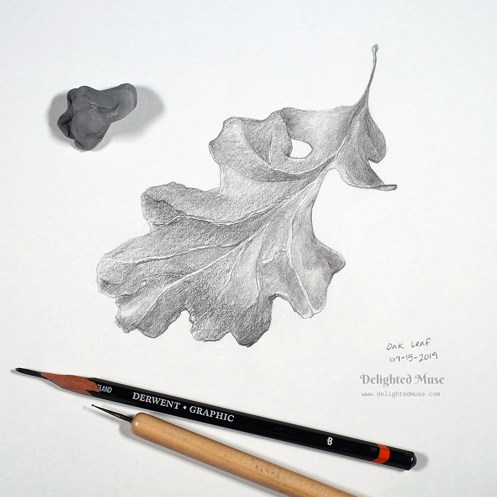 Drawing of an oak leaf in graphite pencil