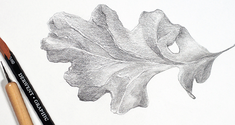 Oak leaf drawing in graphite pencil