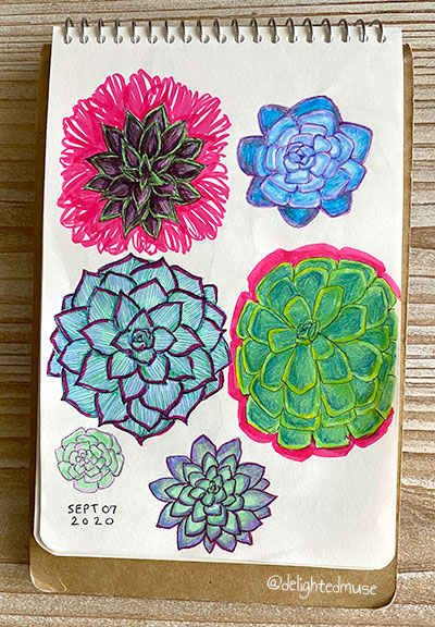 Rough marker drawings of six Echeveria succulents, drawn at various sizes in greens, blues, and purples.