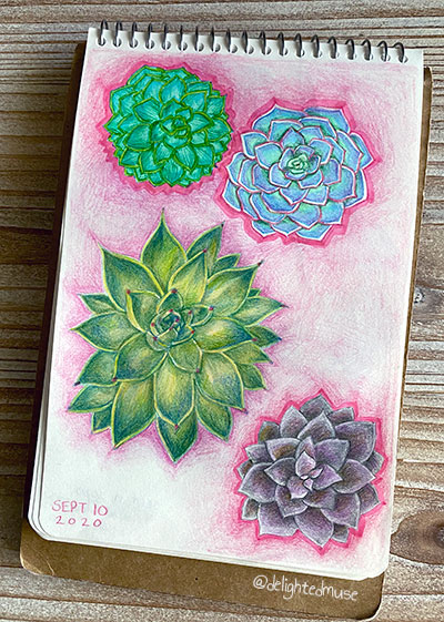 Open sketchbook showing colored pencil drawings of Echeveria succulent plants with bright pink background outlines